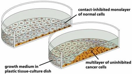 Tumor Cell Culture Guide | Creative Bioarray