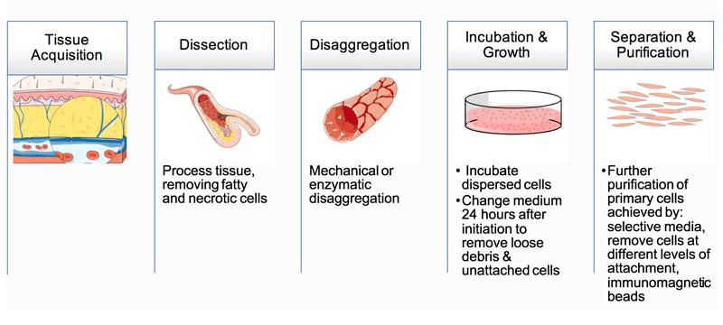 Primary Cell Culture Guide | Creative Bioarray