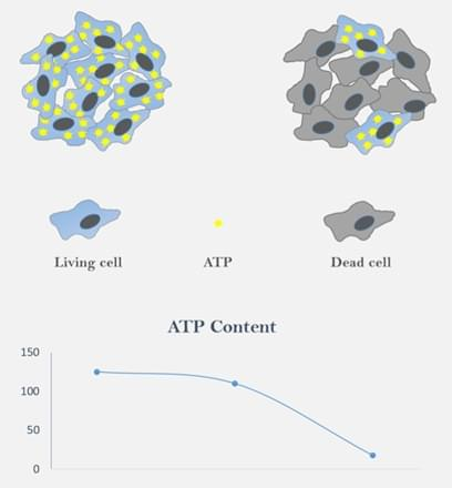 ATP Content in 3D Cell Cultures