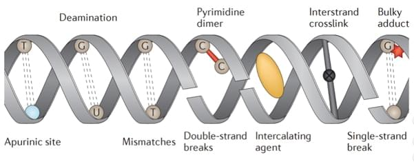 An overview of types of DNA damage