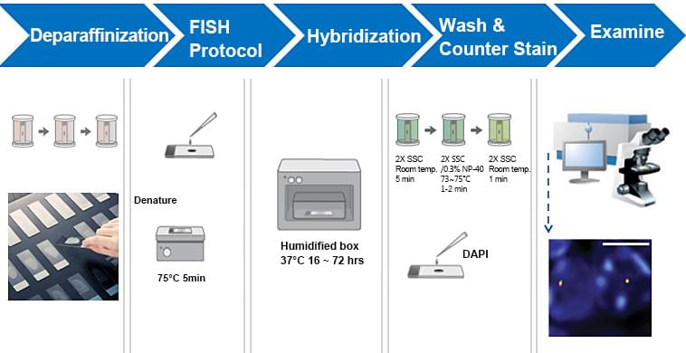 FISH Protocol For Paraffin Embedded Tissue Samples