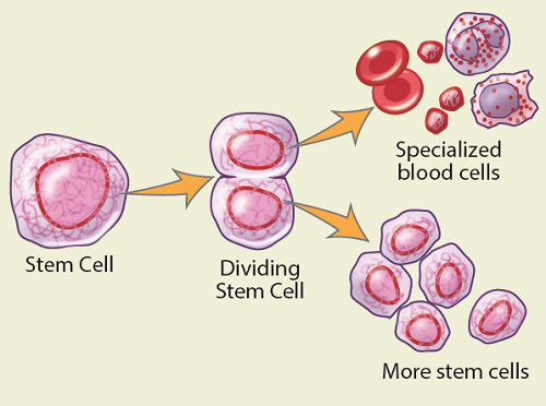 how to draw blood cells