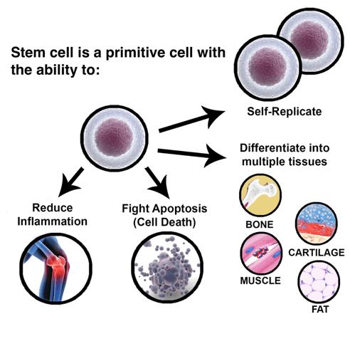 Stem Cell Culture Guide   Creative Bioarray